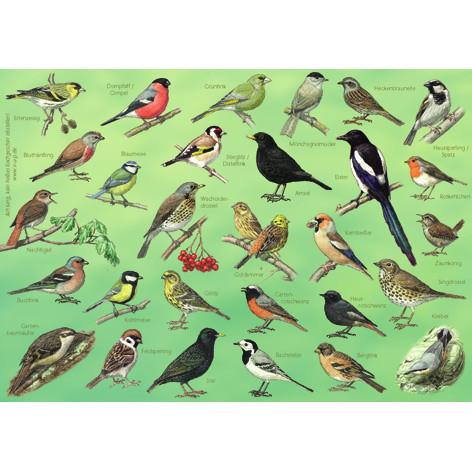 Tischset Gartenvögel