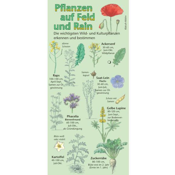 Pflanzen auf Feld und Rain