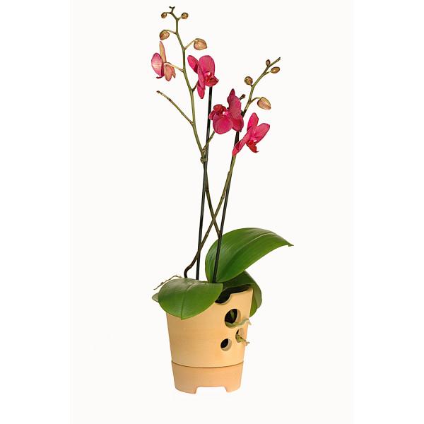 Pflanztopf für Orchideen