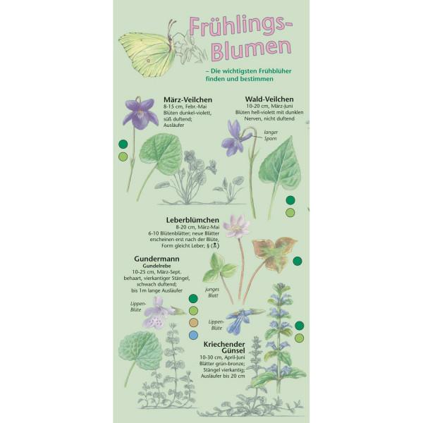 Frühlings-Blumen - Bestimmungshilfe