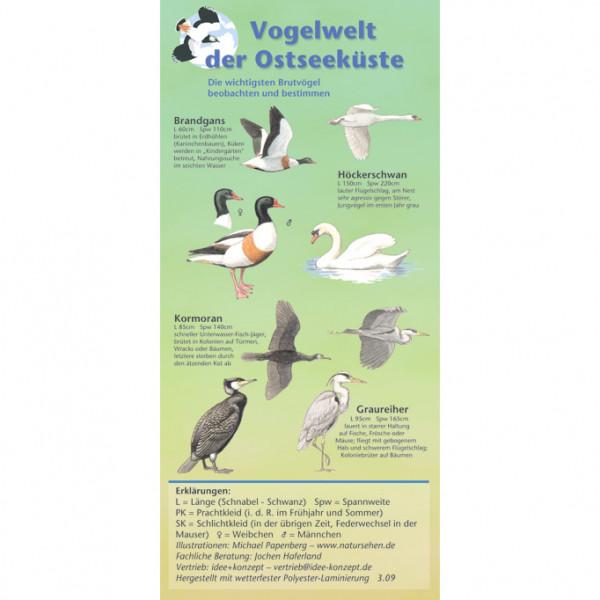 Vogelwelt der Ostseeküste