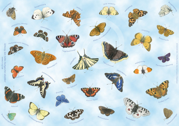 Tischset Schmetterlinge