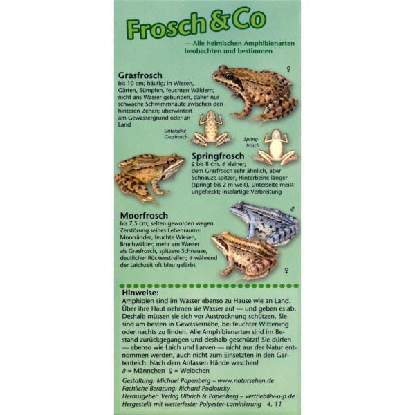 Frosch & Co