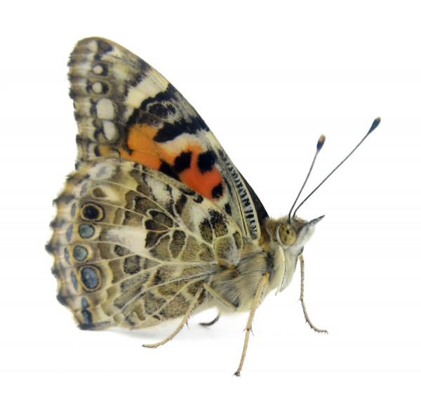 Schmetterlings-Geschenk Set