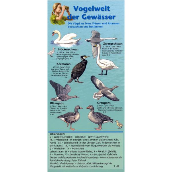 Vogelwelt der Gewässer