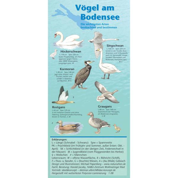 Vogelwelt am Bodensee - Bestimmungshilfe